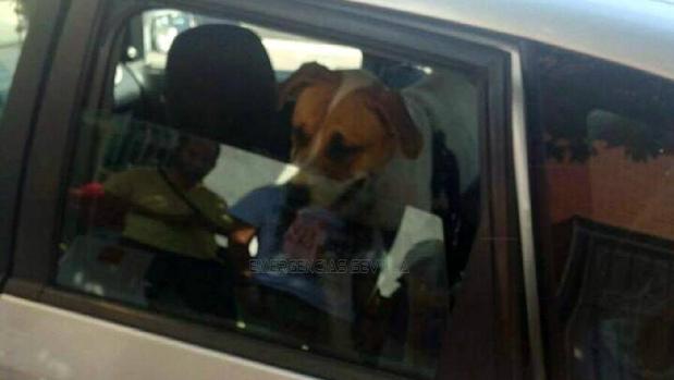 La Policía ha bajado la ventanilla para ventilar el habitáculo y socorrer al animal