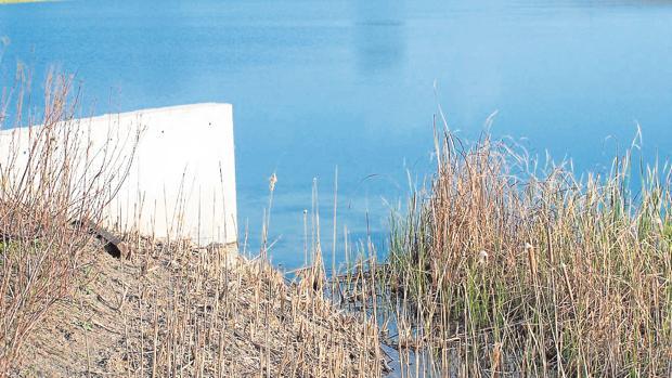 Imagen de una de las balsas de la marisma sevillana, donde tendría que estar habilitado el nuevo sistema