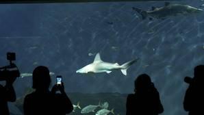 El acuario, en preconcurso por acumular más de 5 millones de deuda