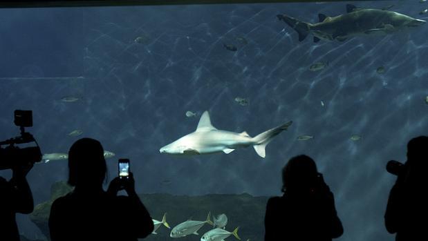Tiburones en el acuario de Sevilla
