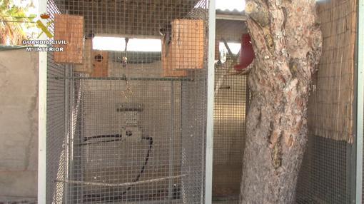 Las jaulas en las que se encontraban algunos de los animales