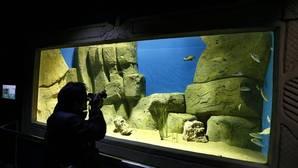El acuario confía en la gestora de Isla Mágica para salir a flote