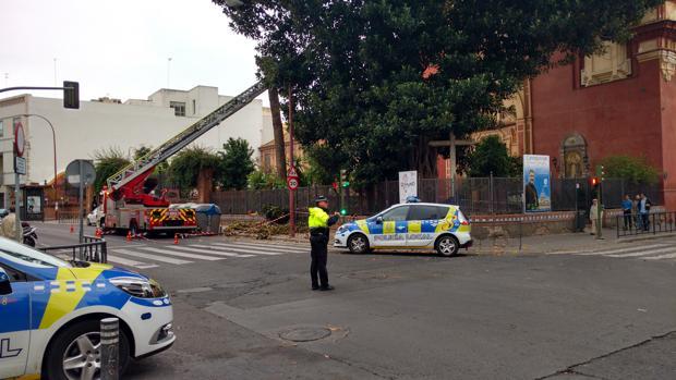 Bomberos y Policía Local en la calle San Jacinto, donde se cayó una rama recientemente