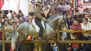 ¿Cuánto cuestan los arreos de un caballo?