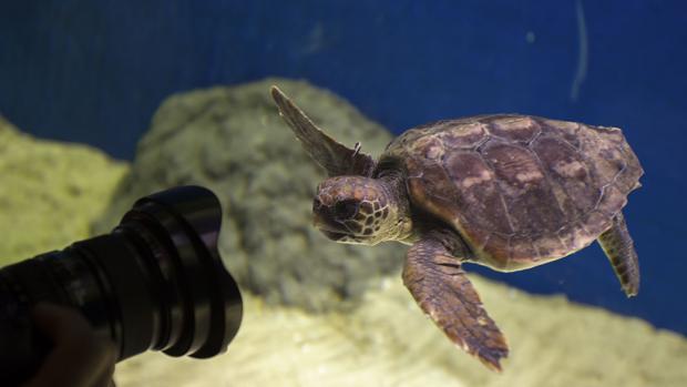 El acuario de Sevilla ha perdido hasta ahora un millón de euros