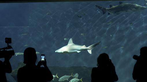 El acuario de Sevilla cuenta con 7.000 animales de 400 especies