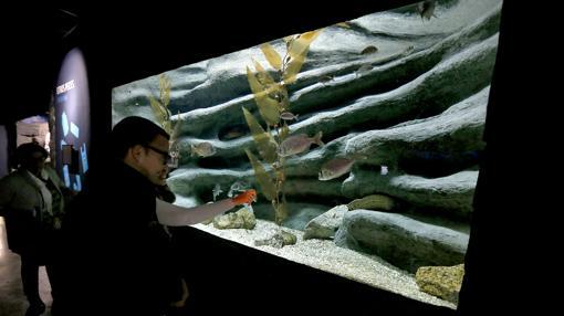 El acuario esperaba en 2015 un total de 493.000 visitas pero recibió 265.000