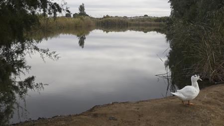Un ave rondando la laguna del parque del Tamarguillo
