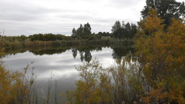 La frondosa laguna del parque del Tamarguillo está en la zona de aproximación del aeropuerto de Sevilla