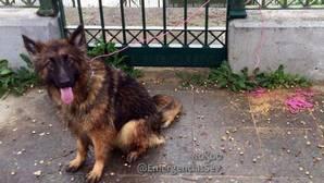 El perro, ya sano y salvo, tras el rescate