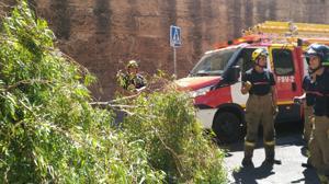Detalle de la rama caída sobre la Muralla de la Macarena una vez retirada