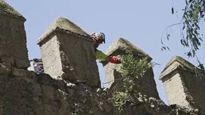 Nuevo desprendimiento de un árbol caído sobre la Muralla de la Macarena