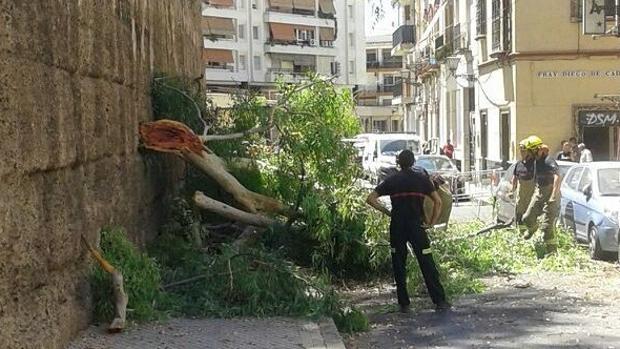 Bomberos trabajan junto a los trozos de eucalipto caídos en la Macarena
