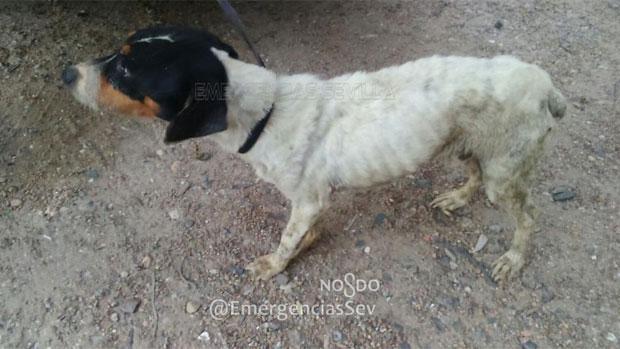 El perro rescatado tras ser abandonado en la azotea de una vivienda en Torreblanca