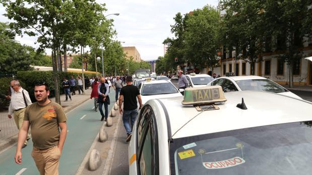 Varios taxis aparcados en la avenida de la Borbolla, en Sevilla