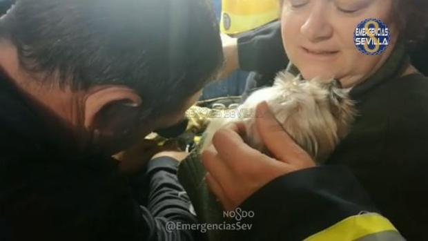 Los bomberos lograron liberar al animal sin hacerle ningún daño