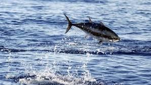¿De dónde viene el pescado que comemos?