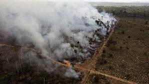 La mitad de todas las especies de árboles de la Amazonía podrían estar en peligro de extinción