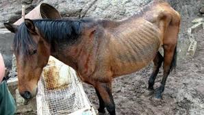 El hombre que mató a golpes a su caballo sale en libertad un mes y medio después