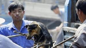 500.000 firmas contra el comercio de carne de perros y gatos en China