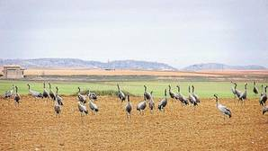 Denuncian irregularidades en la paralización del ATC por la Junta de Castilla-La Mancha