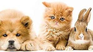 Mascotas: ¡Cuidado venenos!