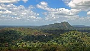 El exceso de caza en los bosques amazónicos podría agravar el calentamiento global