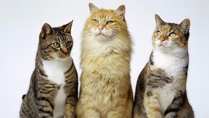 Historia y leyenda de los gatos: de compañeros de las legiones a signo de brujería