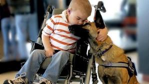 Mascotas, una parte fundamental de la sociedad