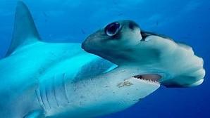 Ecuador inaugura en las islas Galápagos el mayor refugio de tiburones del planeta