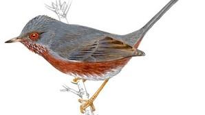 El cambio climático amplifica los impactos negativos o positivos en aves de todo el planeta