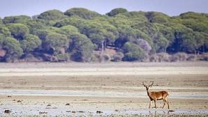 El Parque de Doñana, amenazado por la actividad industrial