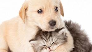 Mascotas: Menudas alergias perrunas
