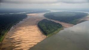 El increíble arrecife de coral de 1.000 kilómetros hallado en la boca del río Amazonas