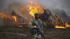 Kenia declara la guerra a los furtivos con una hoguera de 105 toneladas de marfil