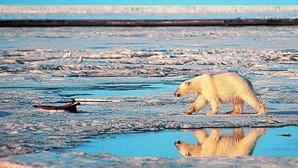 Alarma en Alaska por el deshielo temprano del Ártico