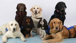 Mascotas, compañeros de terapia