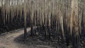 El 80% de los incendios forestales están provocados por el hombre y el 30% son descuidos