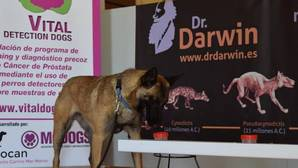 La «patrulla canina» contra el cáncer de próstata