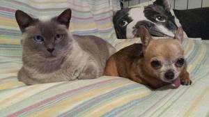 Gato y perro, ¿relación conflictiva?