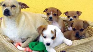 Más de 137.000 perros y gatos recogidos en España durante 2015