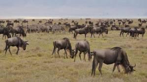 La biodiversidad cae por debajo de los niveles de seguridad a nivel mundial