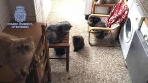 Detienen a un matrimonio por maltrato animal y rescatan a 39 gatos y 13 perros hacinados en su casa