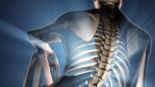 El esqueleto se comporta como un órgano endocrino