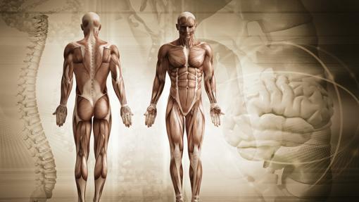 El ejercicio produce cambios epigenéicos en el músculo esquelético