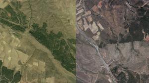 Antes y después de un incendio: el bosque perdido y el bosque por recuperar
