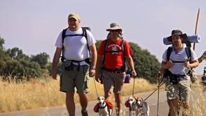 Logran más 63.000 firmas para salvar a los perros abandonados en el Camino de Santiago