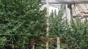 La marihuana seguirá siendo una droga potencialmente peligrosa en EE.UU.