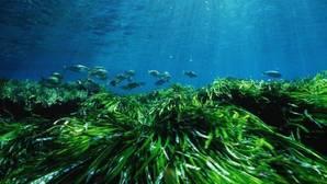 Siete nuevas Zonas de Especial Conservación en el Mediterráneo