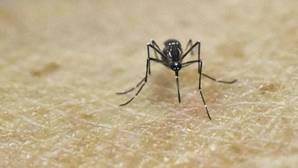 Ascienden a 237 los casos de zika en España, 38 de ellos en embarazadas